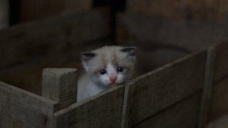 小さな箱に入る猫